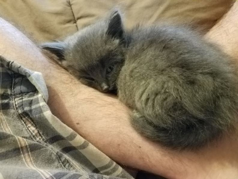 kitten rescued after fishing trip 3
