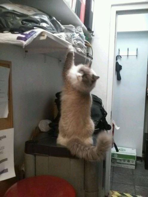 cat supervisor of hotel 9