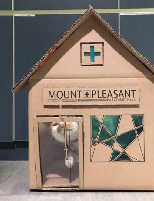 vet office amazing houses for resident cat 11