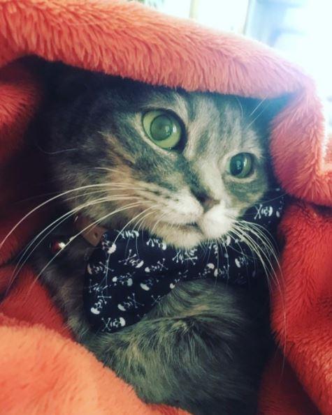 micro smores kitten 6