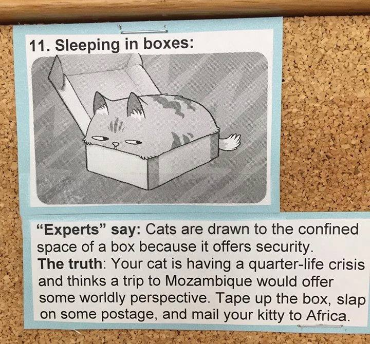 what cats really mean 11