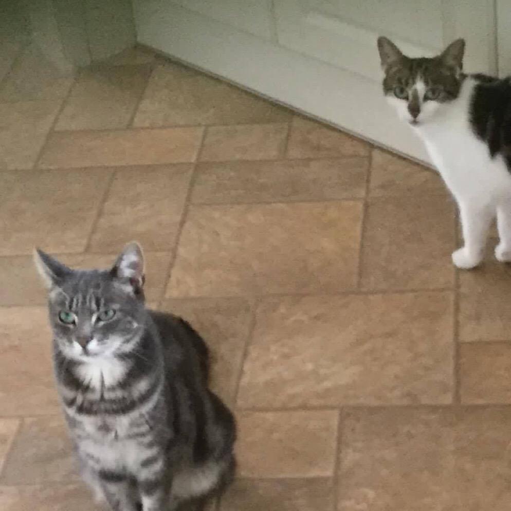 trio cats 1