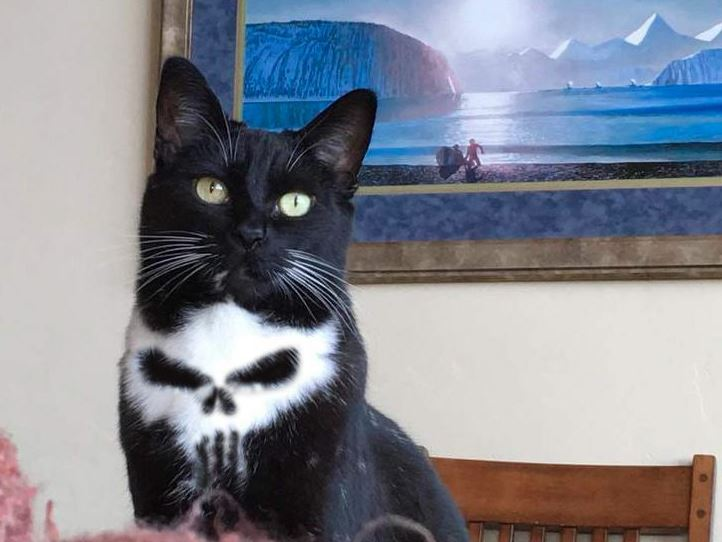 punisher cat ps battle