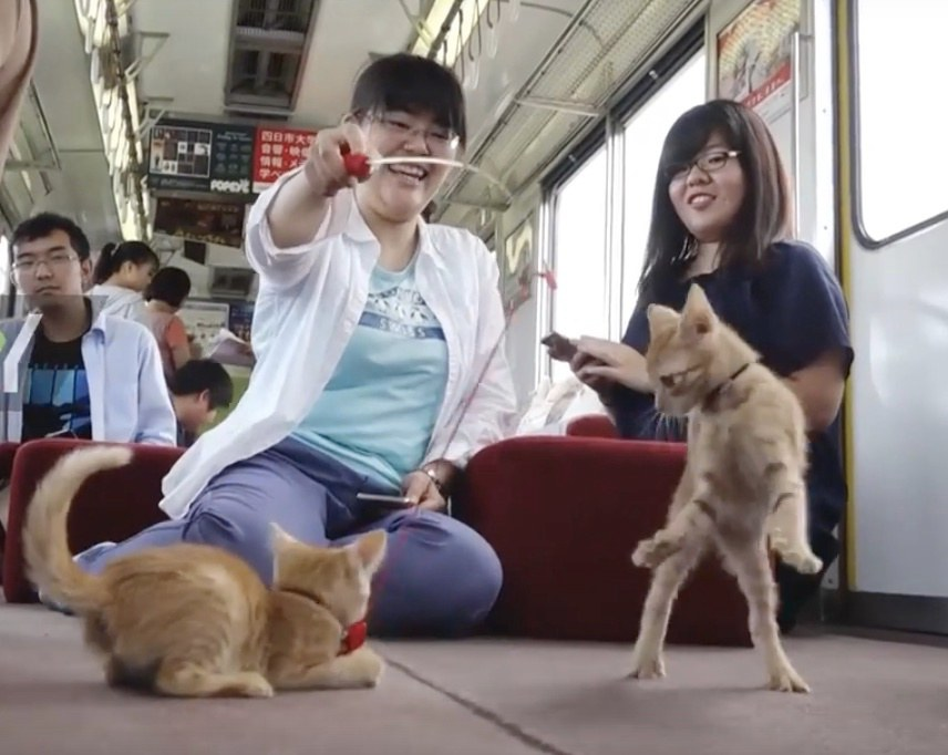 cats on a train 1
