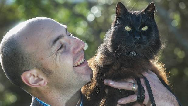 missing cat for a decade finally returns home 1