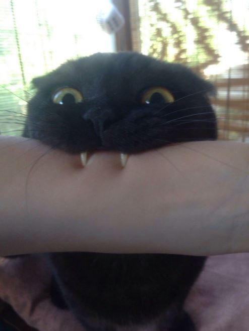 happy cat friday 5