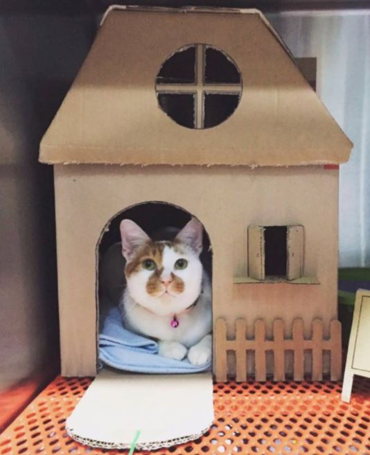 amazing houses built for resident cat vet 4