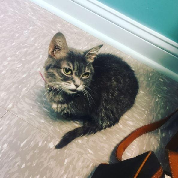 micro smores kitten 4