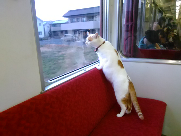 cats on a train 4