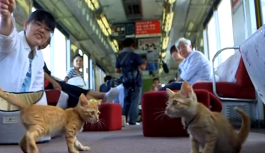 cats on a train 2