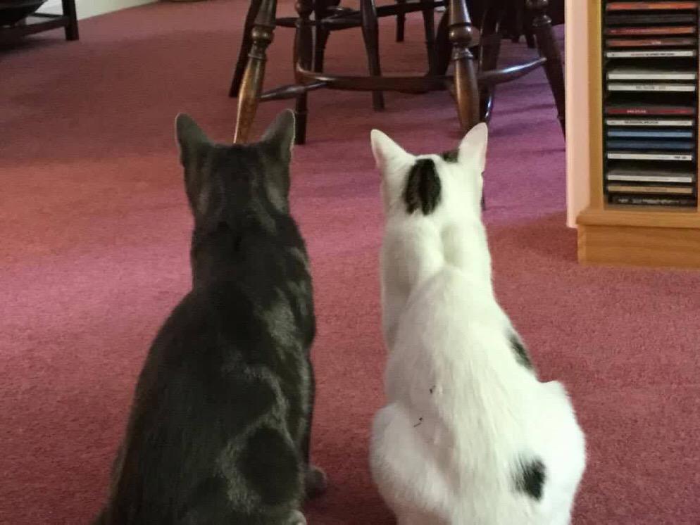 trio cats 2