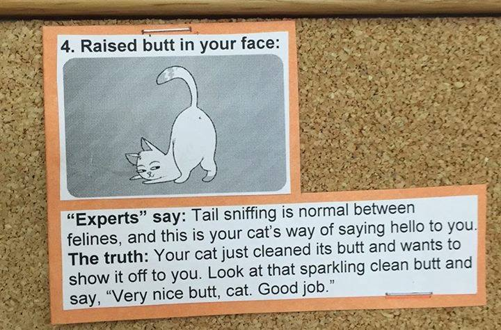 what cats really mean 4