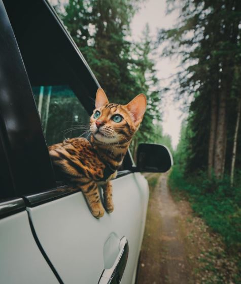 suki the adventure cat 6
