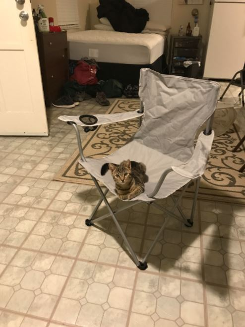man finds cat in chair 1
