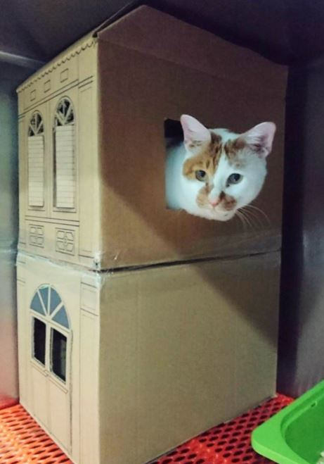 amazing houses built for resident cat at vet office 13