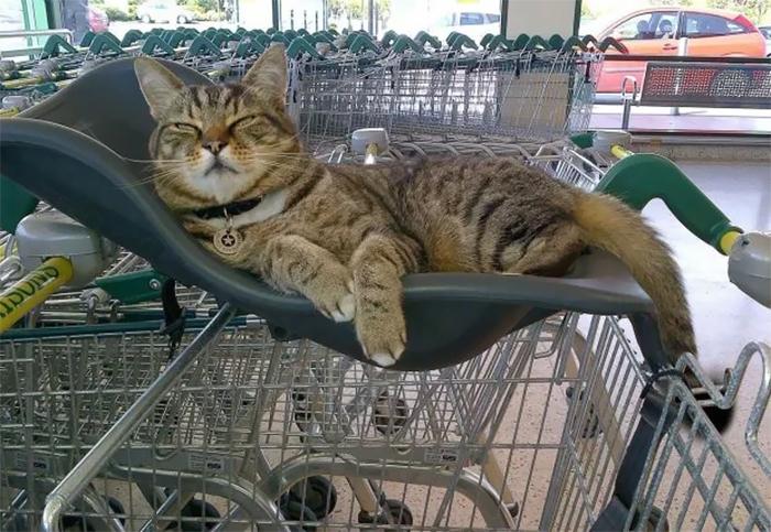 supermarket cat statue 5