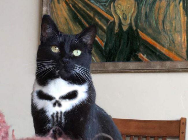 punisher cat ps battle 7
