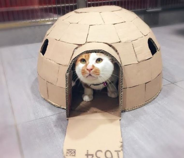 amazing houses made for resident cat at vet office 6