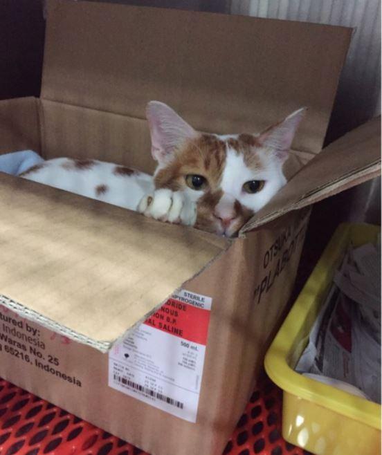 amazing houses built for resident vet cat 3