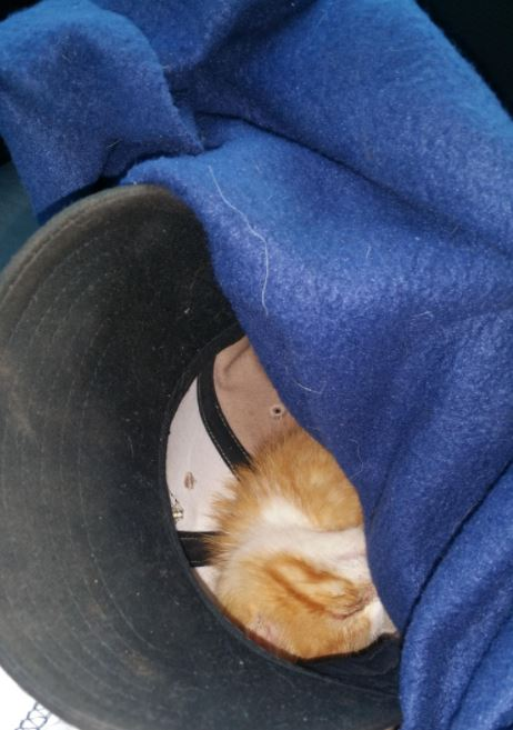 kitten rescued from pipeline construction 3