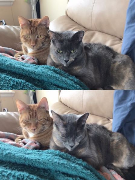 cats before and after being told theyre beautiful 5