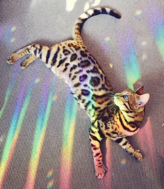 happy cat friday 11