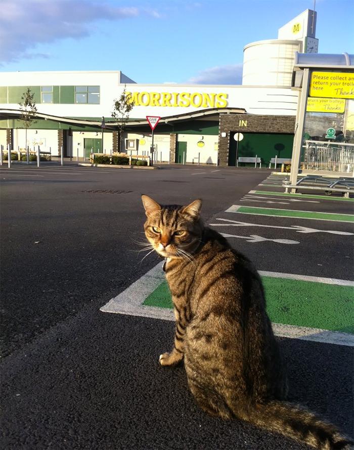 supermarket cat statue 2