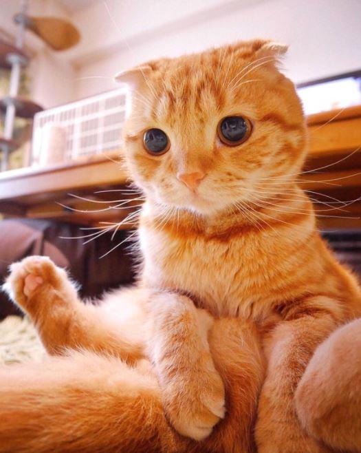 happy cat friday 6