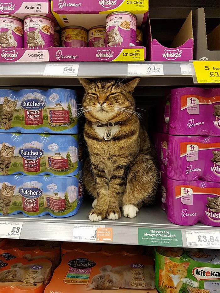 supermarket cat statue 1