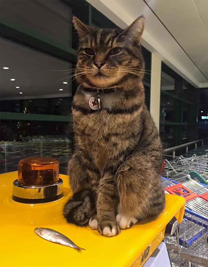 supermarket cat statue 3