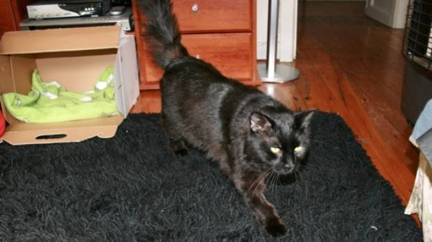 missing cat returns home almost a decade later
