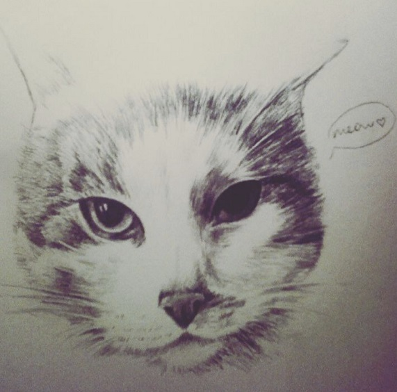 cuqui cat drawing