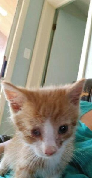 kitten rescued from pipeline construction 2