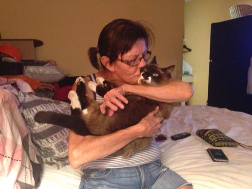 cat returns safe after wildfire