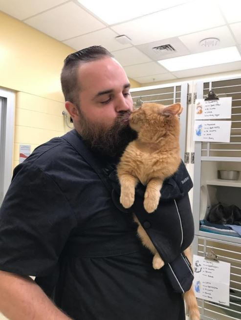 cat held in bjorn 2