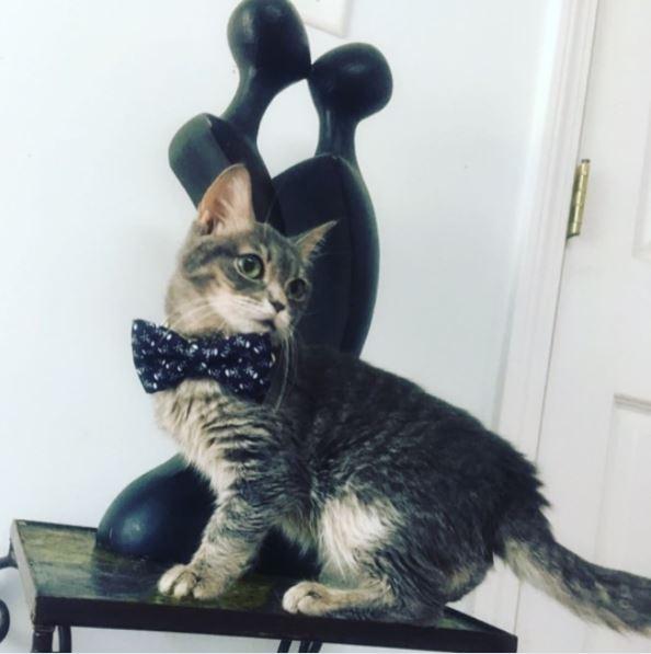 micro smores kitten 2