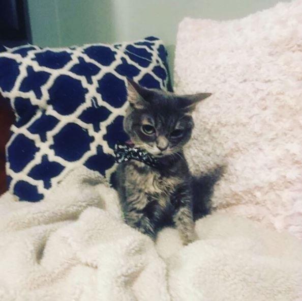 micro smores the kitten 1