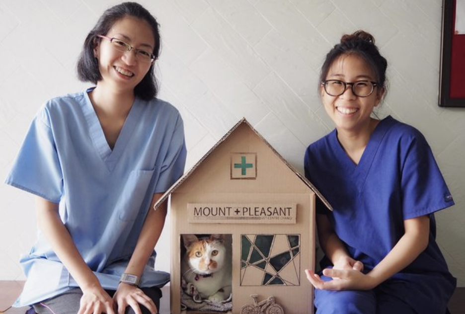 vet office resident cat gets house 1