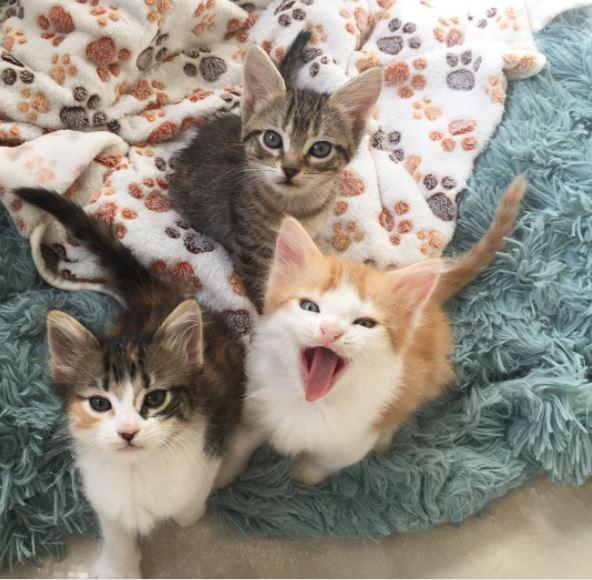 cop fosters kittens 3