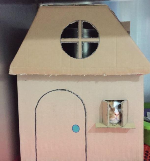 amazing houses made for resident cat at vet office 5