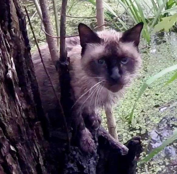 cat in swamp 3