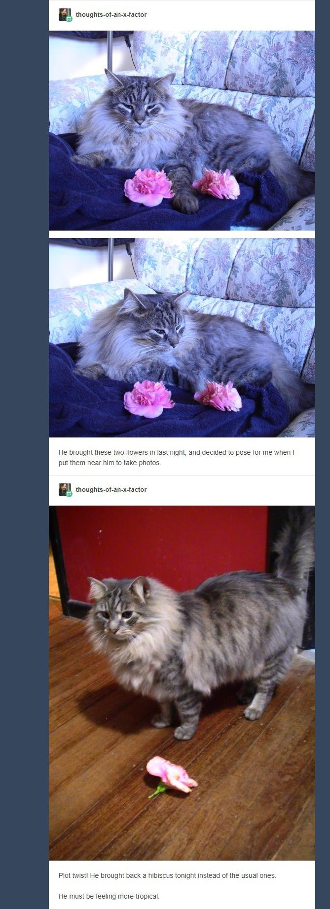 cat brings flowers 5