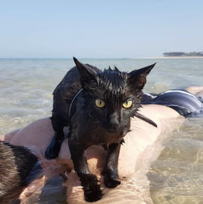 black cat loves the beach 1