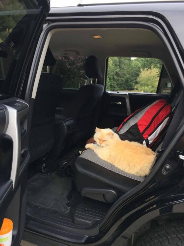 simba the cat hopping into the car 2