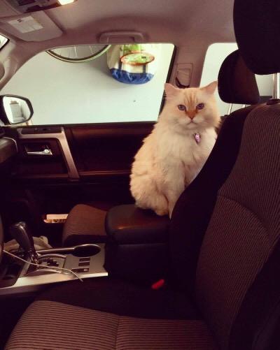simba in the car 3