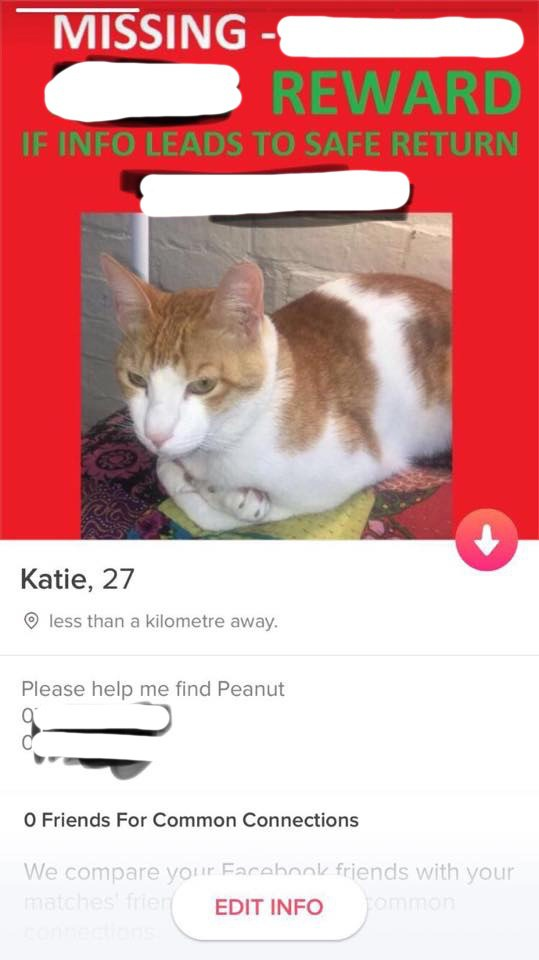woman uses tinder to find missing cat 3
