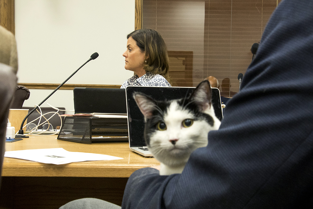cat on denver council about declawing