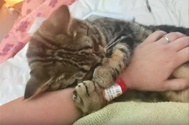 kitten found at gas station turns out to be a miracle 3