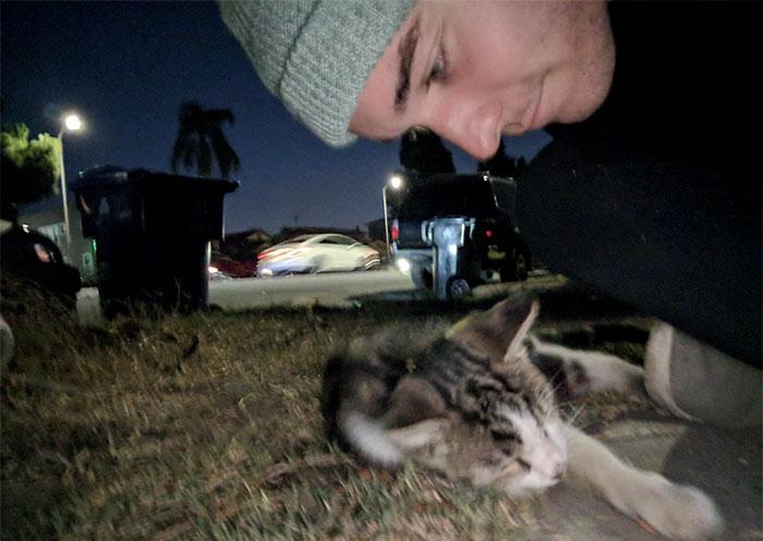 man follows stray cat home 3
