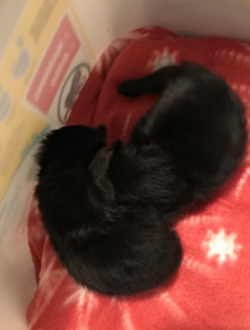 man finds black kittens under his home